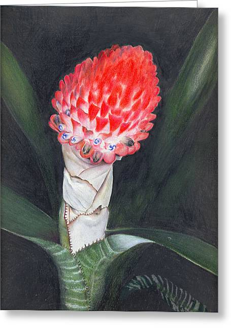 Bromeliad Greeting Cards - Winter Torch Greeting Card by Penrith Goff