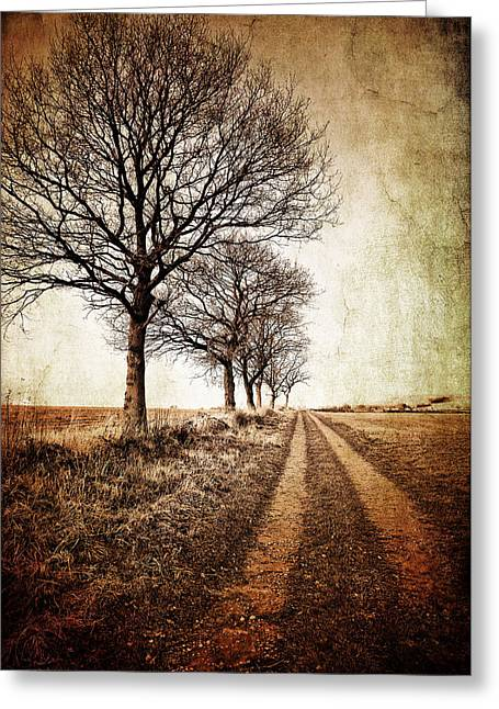 Vanishing Greeting Cards - Winter Track With Trees Greeting Card by Meirion Matthias