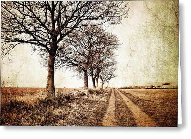 winter track with trees Greeting Card by Meirion Matthias