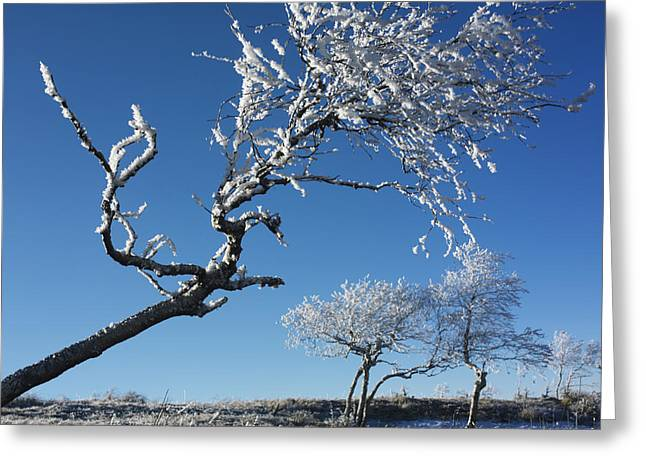 Snow Covered Field Greeting Cards - Winter tree. Greeting Card by Bernard Jaubert