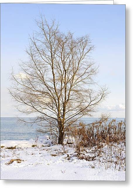 Frosty Greeting Cards - Winter tree on shore Greeting Card by Elena Elisseeva