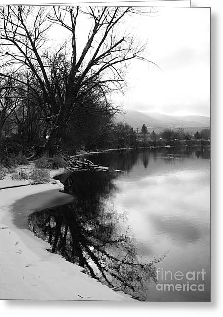 Silhouettes Of Horses Greeting Cards - Winter Tree Reflection - Black and White Greeting Card by Carol Groenen