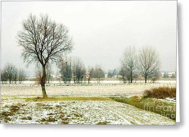 Winter trees Greeting Card by Silvia Ganora