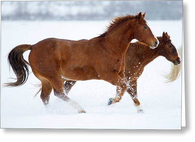 Winter Trot Greeting Card by Mike Dawson