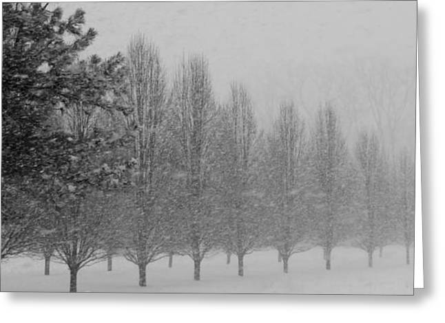 Indiana Winters Greeting Cards - Winter Walk Greeting Card by Ed Smith