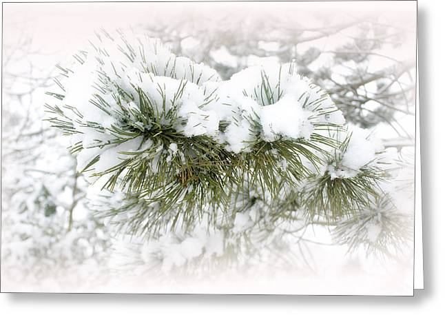 Coldness Photographs Greeting Cards - Winter White Greeting Card by Barbara  White
