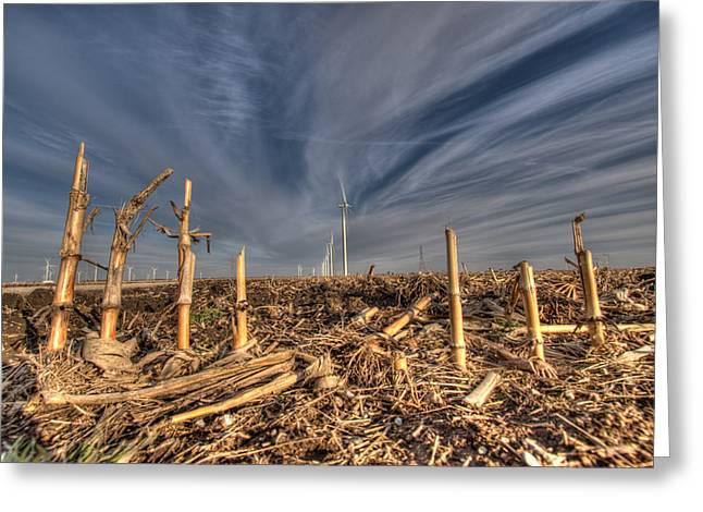 Indiana Winters Digital Art Greeting Cards - Winter Wind in Corn Field Greeting Card by Stephan Mazurek