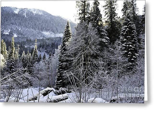 Bruster Greeting Cards - Winter Wonderland Greeting Card by Clayton Bruster