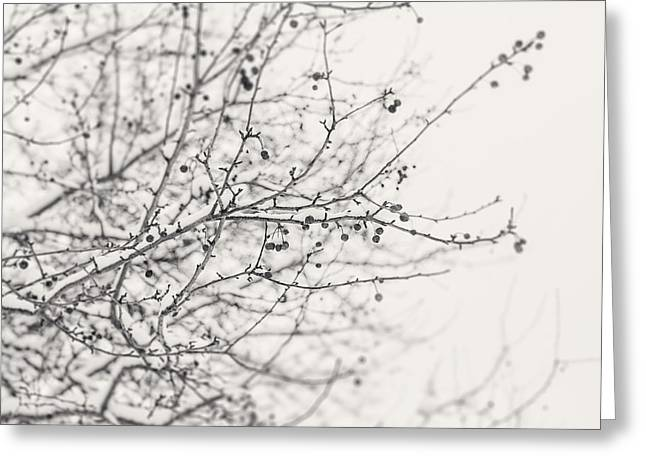 Black Berries Greeting Cards - Winters Berries in Black and White Greeting Card by Lisa Russo