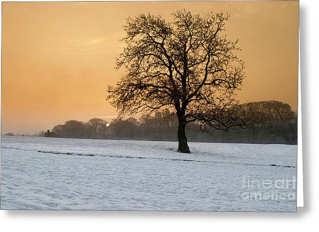 Winters Morning Greeting Card by Stephen Smith