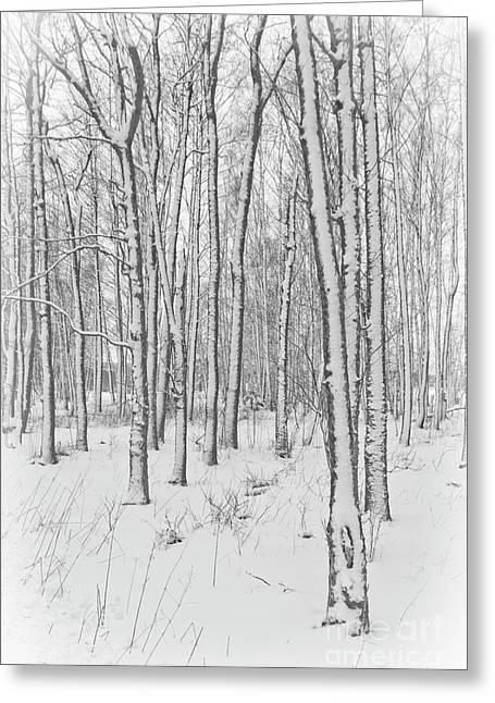 Wintertime Greeting Card by Veikko Suikkanen