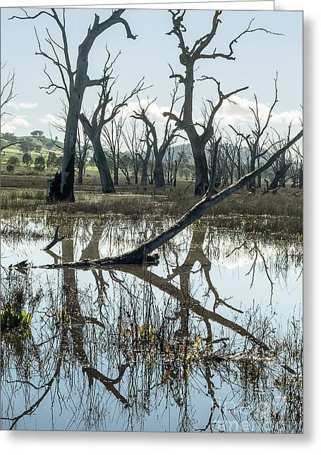 Winton Wetlands Greeting Card by Linda Lees