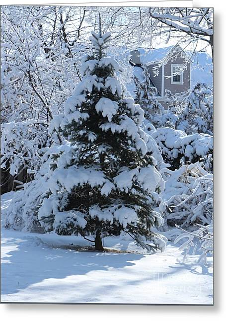 Wintry Greeting Cards - Wintry Pine Tree in the Morning Greeting Card by Jari Hawk