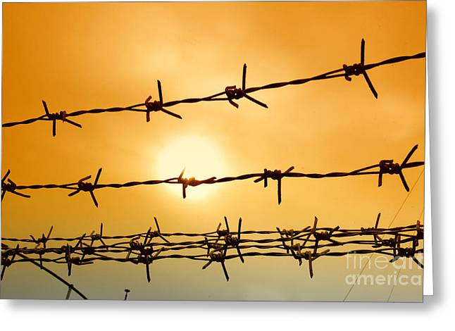 Tyrannies Greeting Cards - Wire Fence Greeting Card by Antoni Halim