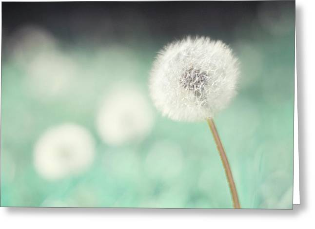 Aqua Flowers Greeting Cards - Wish Come True Greeting Card by Amy Tyler