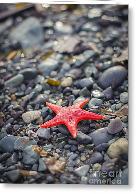 Shell Texture Greeting Cards - Wish Upon a Sea Star Greeting Card by Alanna DPhoto