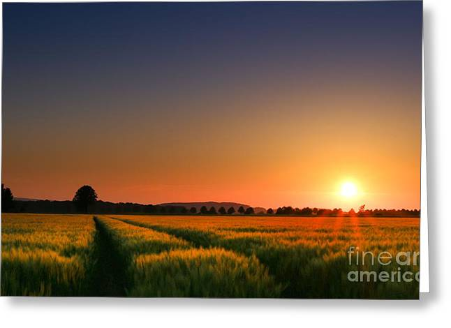 Cornfield Digital Art Greeting Cards - Wish You Were Here Greeting Card by Franziskus Pfleghart