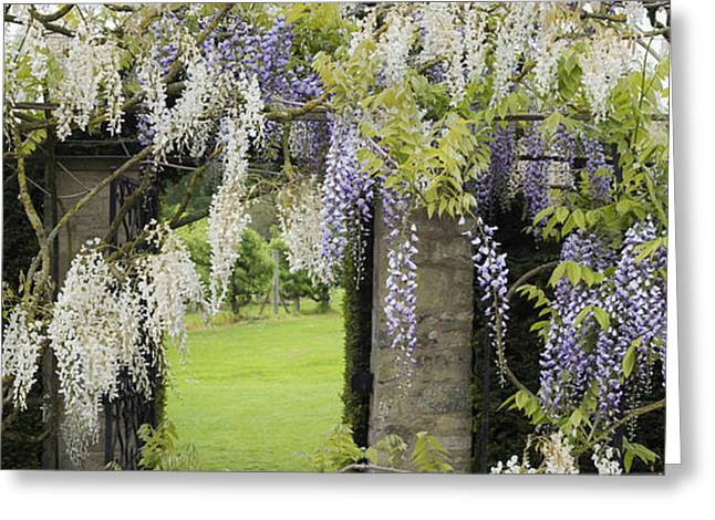Twine Greeting Cards - Wisteria Doorway Greeting Card by Tim Gainey