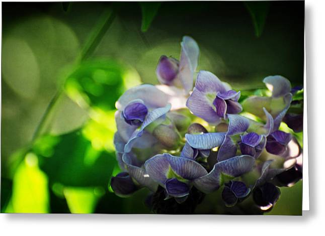 Flowering Vines Greeting Cards - Wisteria frutescens Amethyst Falls Greeting Card by Rebecca Sherman