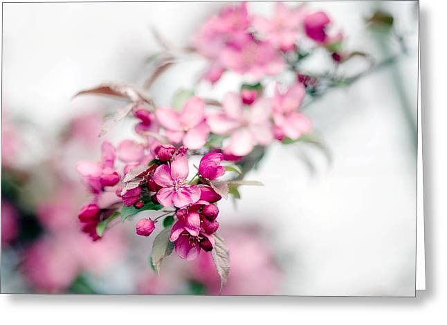 Haze Photographs Greeting Cards - Wisteria Greeting Card by Rebecca Cozart