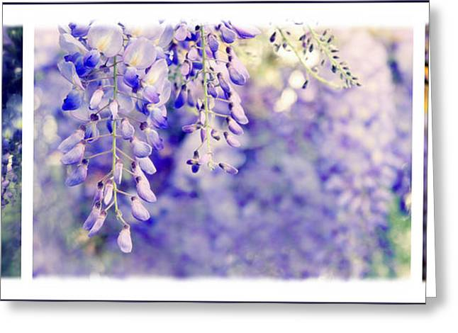 Botanical Greeting Cards - Wisteria Triptych Greeting Card by Jessica Jenney