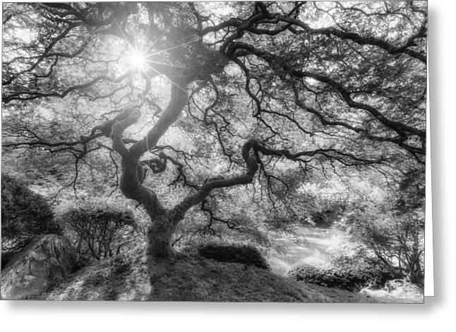 Sun And Tree Greeting Cards - Witches Light Greeting Card by Darren  White