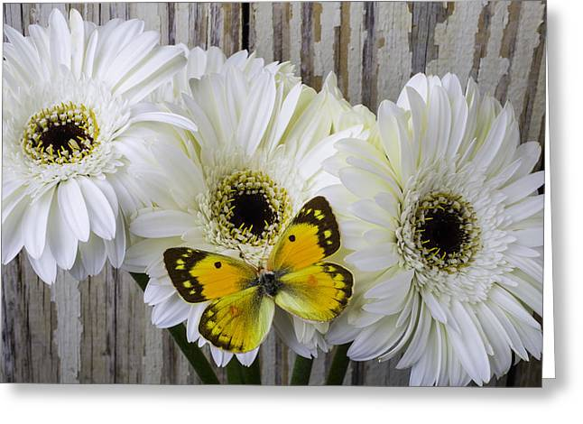 With Daises With Beautiful Yellow Butterfly Greeting Card by Garry Gay