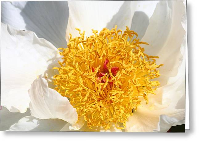 Stigma Greeting Cards - With A Touch Of Gold Greeting Card by Rumyana Whitcher
