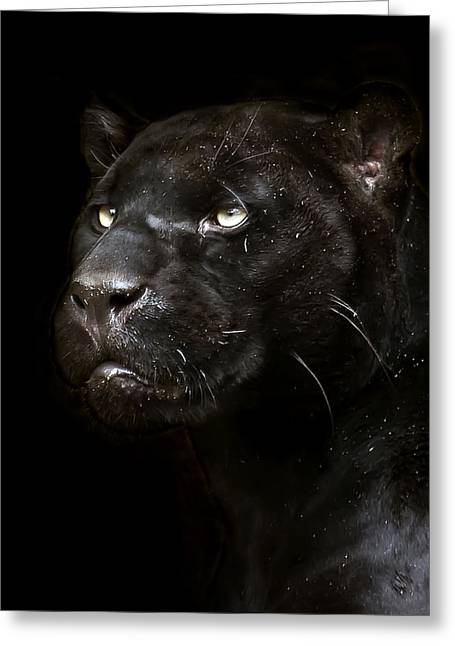 Jaguars Greeting Cards - Within Greeting Card by Cheri McEachin