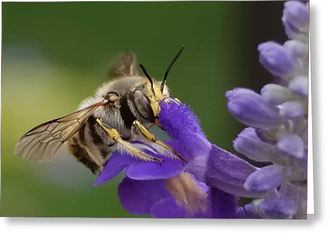 Pollinator Greeting Cards - Without Me  Greeting Card by Steven Milner