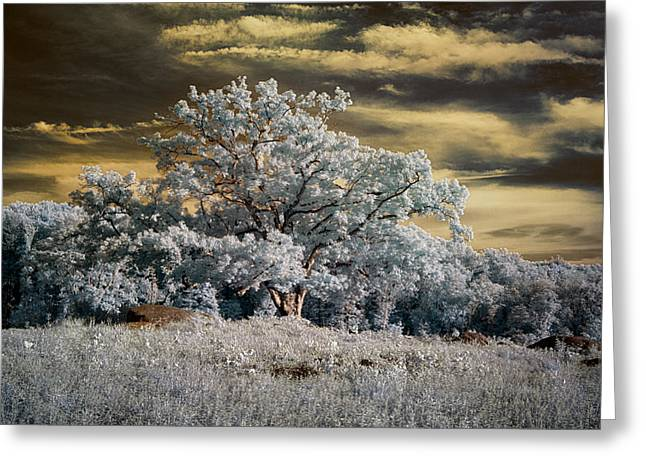 Devils Den Greeting Cards - Witness to History Greeting Card by Dan Urban