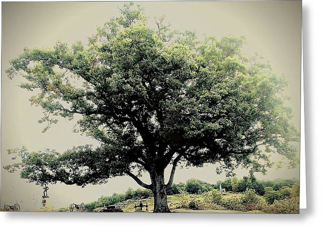 Devils Den Greeting Cards - Witness Tree Greeting Card by Kacie Donnelly