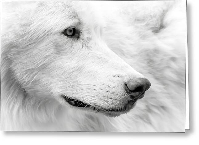 Puppies Photographs Greeting Cards - Wolf Close Up Greeting Card by Athena Mckinzie