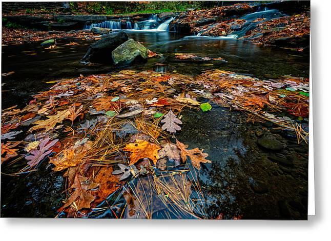 Wolf Creek Greeting Cards - Wolf Creek Greeting Card by Rick Berk