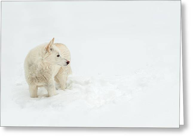 Puppies Photographs Greeting Cards - Wolf Dog in Snow Greeting Card by Joye Ardyn Durham