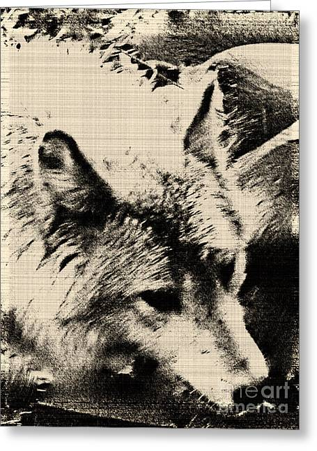 Wolf Lite Greeting Card by Debra     Vatalaro