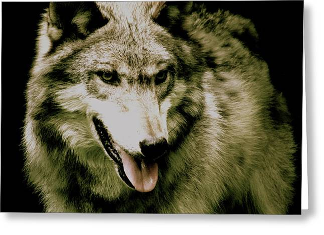 Wolf From The Forest Greeting Cards - Wolf Of The Night Greeting Card by Debra     Vatalaro