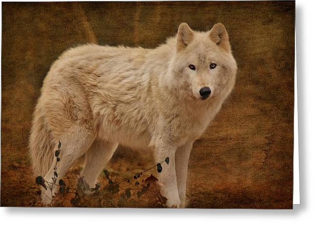 Arctic Wolf Greeting Cards - Wolf Greeting Card by Sandy Keeton