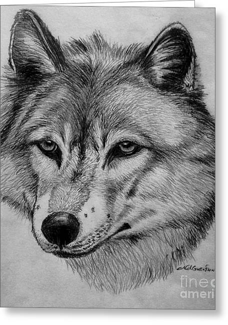 Wildlife Drawings Greeting Cards - Wolf sketch Greeting Card by Nick Gustafson
