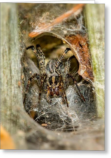 Hairy Wolf Greeting Cards - Wolf Spider Lair Greeting Card by Steve Harrington