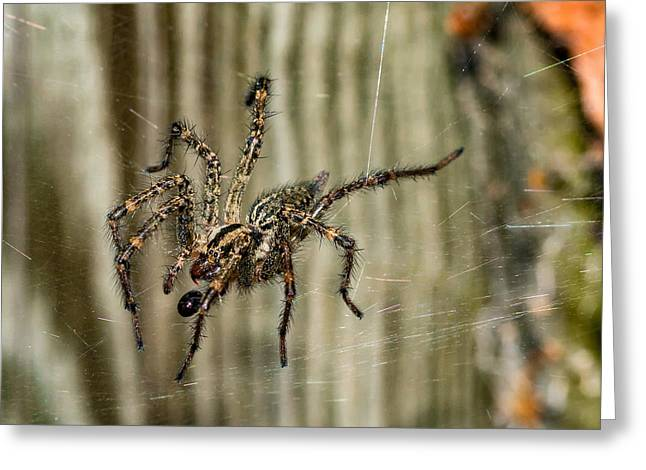 Hairy Wolf Greeting Cards - Wolf Spider Snack Greeting Card by Steve Harrington