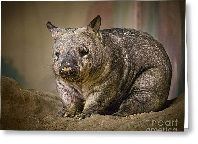 Chubby Greeting Cards - Mr. Wombat Greeting Card by Jamie Pham