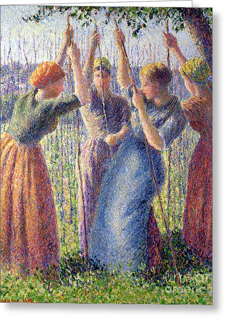 Crops Greeting Cards - Women Planting Peasticks Greeting Card by Camille Pissarro