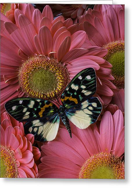 Wondeful Butterfly On Pink Daisy Greeting Card by Garry Gay