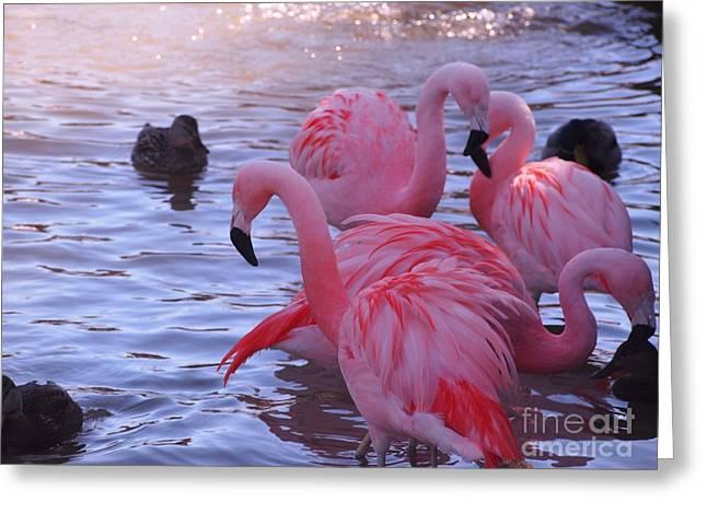 Rosamond Greeting Cards - Wonder Flamingo Family Greeting Card by Jennifer Craft