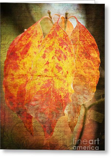 Braun Greeting Cards - Wonderful autumn Greeting Card by Angela Doelling AD DESIGN Photo and PhotoArt