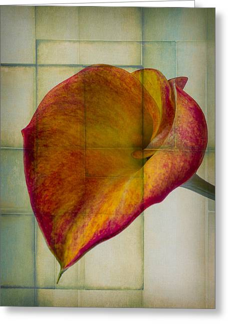 Graphic Photographs Greeting Cards - Wonderful Calla Lily Greeting Card by Garry Gay