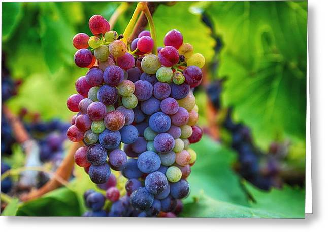 Fruit And Wine Greeting Cards - Wonderful colors Greeting Card by Lynn Hopwood