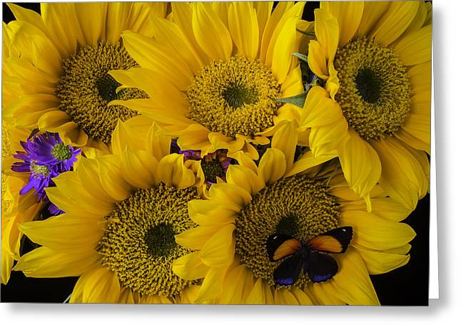 Wonderful Sunflowers Greeting Card by Garry Gay