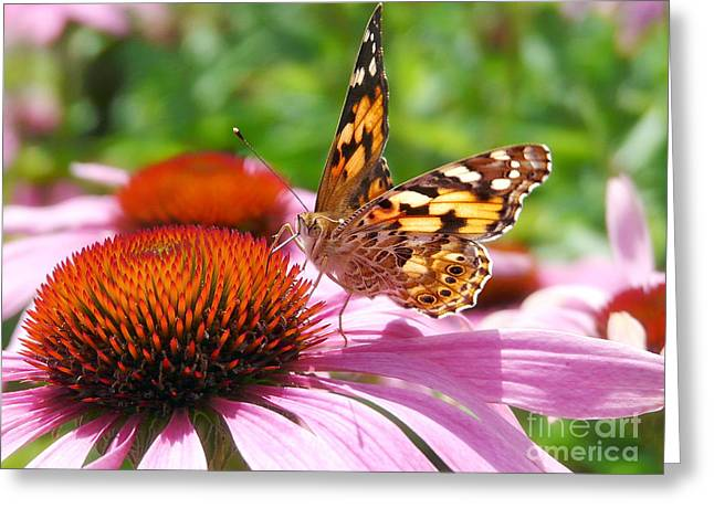 Butterfly Greeting Card by Angela Doelling AD DESIGN Photo and PhotoArt